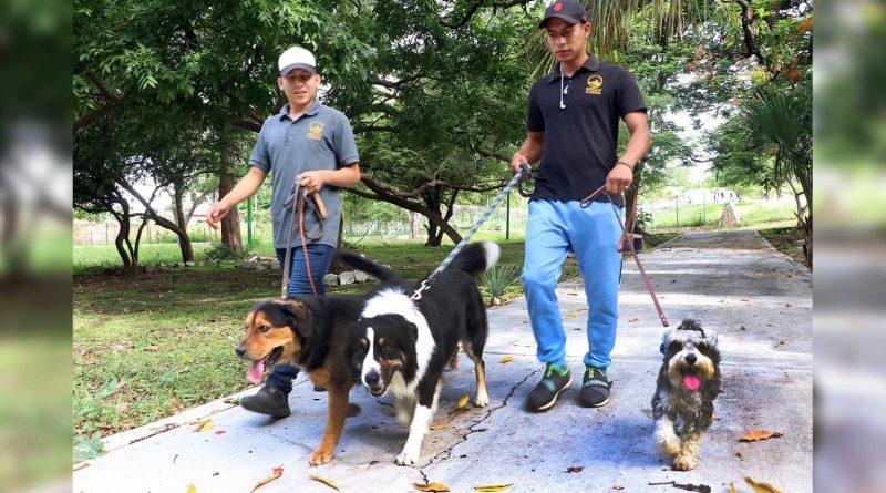 Asociaciones civiles y Ayuntamiento fortalecerán acciones de bienestar animal